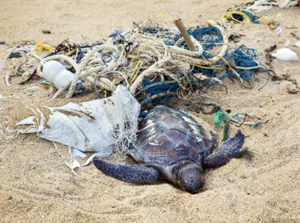 Take time to cleanup our beaches...just 30 minutes!!!
